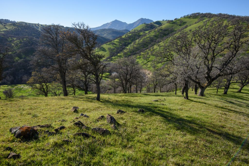 View of Mt. Diablo from the former Hanson Ranch property. photo by Scott Hein
